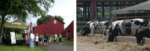 Today, with over 260 Holstein milking cows, the fourth generation of Peracchios work Hytone Farm.